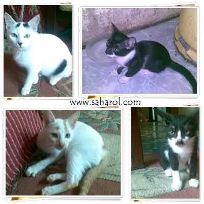 kucing2aku-dirumah-cats-saharoldotcom-2013