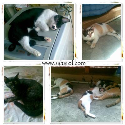kucing2ku-dirumah-cats-saharoldotcom-2013