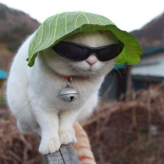 funny-cat-sunglasses-lettuce-hat-lawakkacamata
